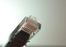 Cavo di Ethernet Immagini Stock Libere da Diritti