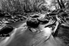 Cavo di flusso il modo alla foresta Immagini Stock