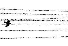 Cavo & piccioni di elettricità Fotografia Stock