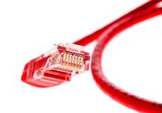 Cavo rosso di UTP della rete con il connettore RJ45 isolato su bianco Fotografia Stock