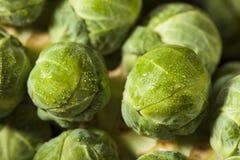 Cavoletti di Bruxelles organici verdi crudi Immagine Stock
