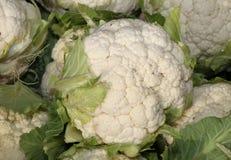 Cavolfiore bianco sulla vendita nella stalla di verdure organica del mercato Immagini Stock Libere da Diritti