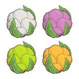 Cavolfiore colorato Fotografia Stock
