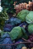 Cavoli viola e verdi Fotografia Stock Libera da Diritti