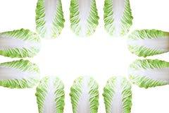 Cavolo bianco per la cottura, immagine di sfondo bianca fotografia stock