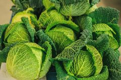 Cavolo fresco sul mercato degli agricoltori Prodotto dietetico e vegetariano Prodotti locali naturali sul mercato dell'azienda ag Fotografie Stock