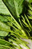 Cavolo fresco verde Fotografie Stock Libere da Diritti