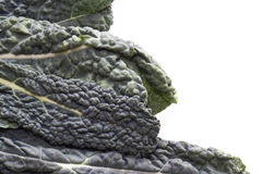 Cavolo Nero grönkål Fotografering för Bildbyråer