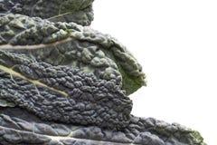 Cavolo Nero Kale Stock Image