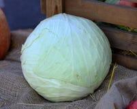 Cavolo organico naturale di autunno dell'azienda agricola rurale bianca del cavolo verzotto sul sacco Fotografia Stock