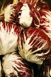 Cavolo rosso Fotografia Stock