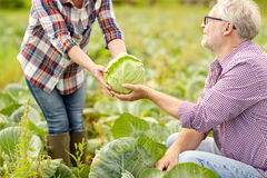 Cavolo senior di raccolto delle coppie sull'azienda agricola Immagine Stock
