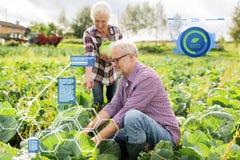 Cavolo senior di raccolto delle coppie sull'azienda agricola Fotografie Stock Libere da Diritti
