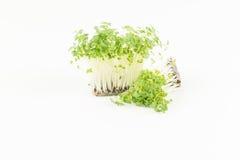 Cavolo verde dei germogli freschi nel fondo bianco Immagine Stock