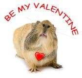 Cavy de la tarjeta del día de San Valentín Fotos de archivo libres de regalías