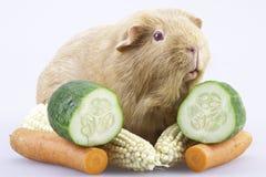 Cavy, proefkonijn met groenten Royalty-vrije Stock Foto's