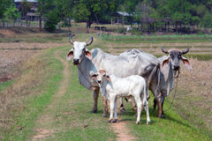 caws семья стоковое фото rf