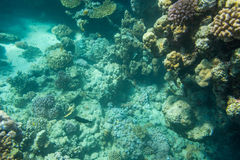Cay. Diving in Sharm El Sheikh Stock Photography