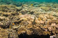 Cay Royalty Free Stock Photos