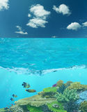 Cay under blue water and cloud sky. Four fishes and cay under blue water and cloud sky Royalty Free Stock Photo