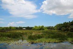 Cay Wetlands verde imagem de stock royalty free