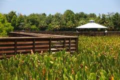 Cay Wetlands verde fotografia de stock