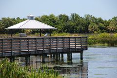 Cay Wetlands verde fotografia de stock royalty free