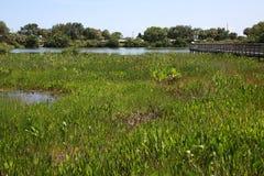 Cay Wetlands verde fotos de stock royalty free