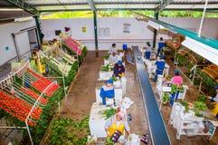 CAYAMBE, ECUADOR - NOVEMBER, 30, 2017: Über Ansicht von den nicht identifizierten Leuten, die innerhalb einer Blumenfabrikklassif Stockfoto