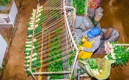 CAYAMBE, ECUADOR - NOVEMBER, 30, 2017: Über der Ansicht der nicht identifizierten Frau arbeitend innerhalb einer Blumenfabrik, kl Stockbild