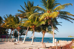 Caye Caulker Belize. Caye Caulker is a small 2 mile long island in Belize Royalty Free Stock Photo