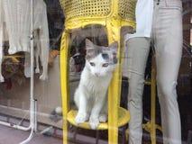 Cayen bakom shoppar fönster 1 royaltyfri fotografi
