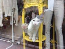 Cayen bakom shoppar fönster 1 arkivbilder