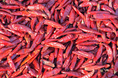 Cayenne pepper Royalty Free Stock Photography