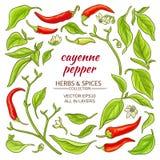 Cayenne pepper elements set Royalty Free Stock Photo