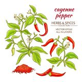 Cayenne pepper set. Cayenne pepper vector set on color background Royalty Free Stock Image