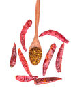 Cayenne pepper on wood spoon and dry pepper Royalty Free Stock Image