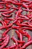 Cayenne peppers background Stock Images