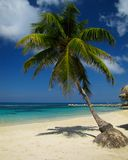 Cayman Cast-a-way Get-a-way. Beautiful azure sea laps at the Palm trees and white sand beaches of the Cayman Islands royalty free stock image