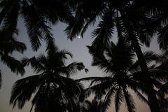 cayo椰子古巴guillermo结构树 免版税图库摄影