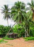 cayo椰子古巴guillermo结构树 库存照片