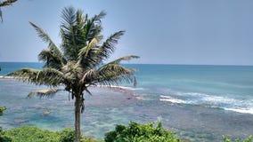 cayo椰子古巴guillermo结构树 图库摄影