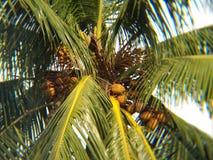 cayo椰子古巴guillermo结构树 免版税库存照片