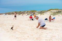 CAYO缓慢地,古巴- 2017年5月10日:在海滩Playa天堂的鸟 复制文本的空间 库存照片