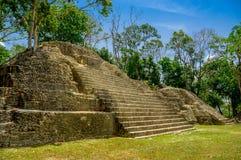 Cayo Belize de pech de Cahal Photo libre de droits