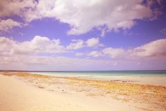 Cayo Coco, Cuba Royalty Free Stock Image