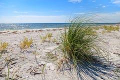 Cayo Costa Beach Seagrass arkivbild