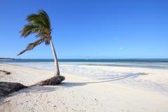 Cayo Guillermo beach, Cuba. Cuba beach landscape - palm trees in Cayo Guillermo (Jardines del Rey Stock Photography