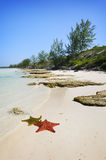 Cayo Guillermo, cuba Stock Photo