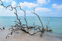 Cayo Jutías Royalty Free Stock Photography